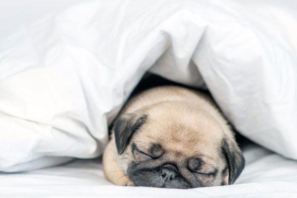 Luxury Down Bedding Primer